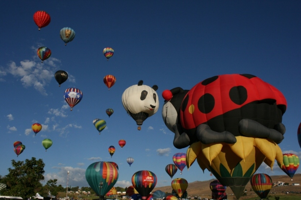 Ladybird Panda Hot Air Balloon
