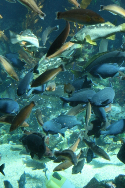 California Science Museum Aquarium Fish