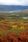 Autumn Colour Denali National Park